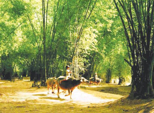 Biểu cảm về cây Tre Việt Nam