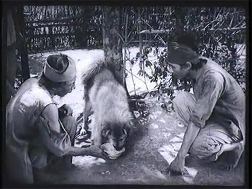 Phân tích tâm trạng của người con trai lão Hạc trong truyện ngắn cùng tên của nhà văn Nam Cao.