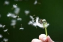 """Suy nghĩ khi đọc đoạn thơ sau đây của Tố Hữu: """"Nếu là con chim, là chiếc lá/Thì chim phải hót, chiếc lá phải xanh/Lẽ nào vay mà không trả/Sống là cho, đâu chỉ nhận riêng mình"""" – Ngữ Văn 12"""