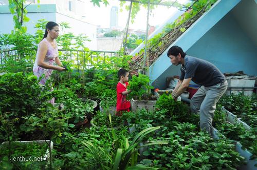 Tả vườn rau nhà em hoặc nhàhàng xóm