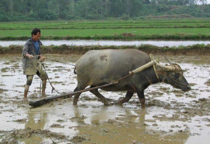 Tả một người công nhân (hoặc nông dân, bác sỹ, y tá…) đang làm việc
